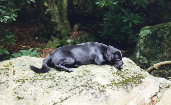 "Free, resting on rock beside, ""Little"" Wilson Creek"